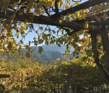 Ein Blick durch das Weinlaub in Ürünlü bei Ormana in der Türkei.