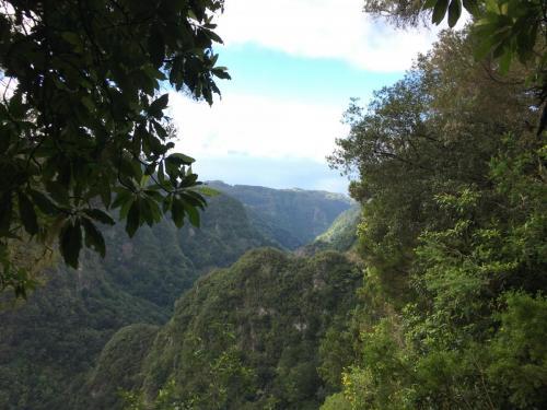 Levada-do-caldeirao-verde-6