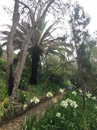 Madeira-Funchal-jardim-botanico-botanischer-garten-1
