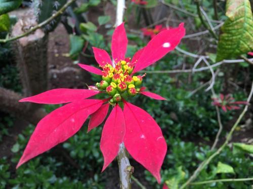 Madeira-Funchal-jardim-botanico-botanischer-garten-6