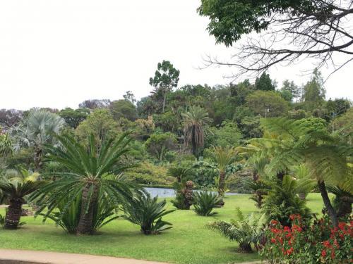 Madeira-Funchal-jardim-botanico-botanischer-garten-9