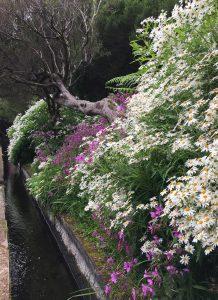 Ein kleiner Wasserlauf, rechts blühende Blumen und links eine bombastische Aussicht. So starten wir in die Levada das 25 Fontes.