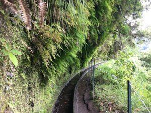 Hier wird es schon enger. Solche Abschnitte auf der Levada do Rei sind aber nicht allzu lang.