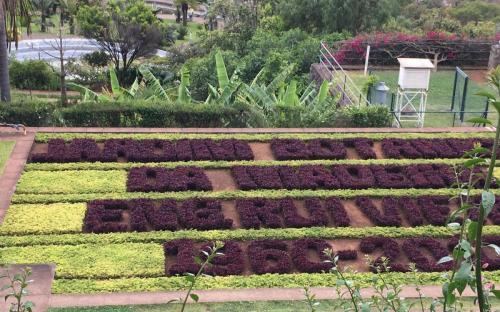 Madeira-Funchal-jardim-botanico-botanischer-garten-11