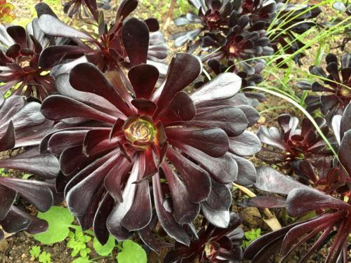 Madeira-Funchal-jardim-botanico-botanischer-garten-8