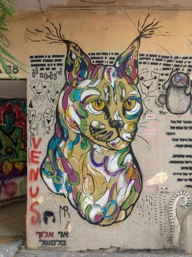 Streetart in Tel Aviv: eine Katze