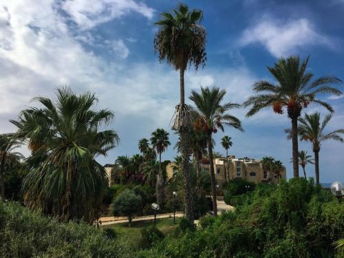 Wundervolle Aussicht in Tel Aviv-Jaffa mit Palmen und alten Gebäude