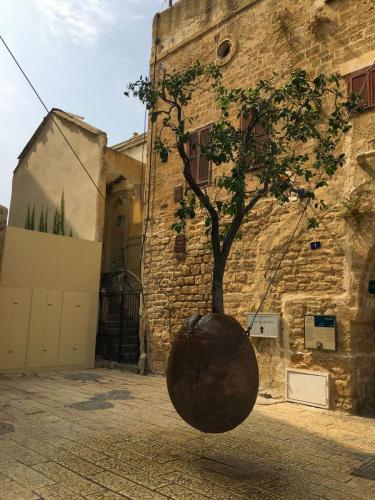 Das Kunstwerk namens Suspended Orange Tree in Tel Aviv Jaffa