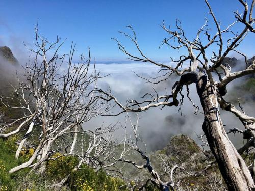 Tote Bäume am Pico Ruivo (Madeira)